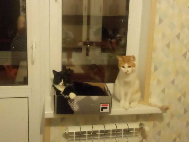 Отдам даром: Кот