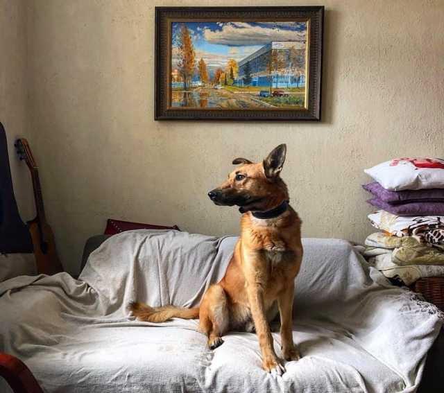 Отдам даром Добрый и умный пёс из приюта!
