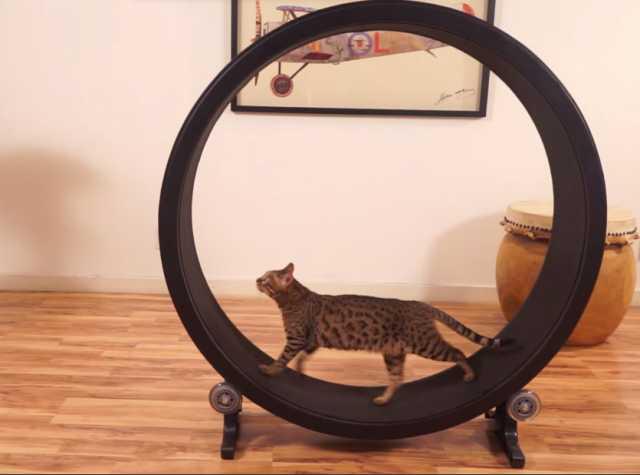 Продам: Беговое колесо-тренажер для кошек