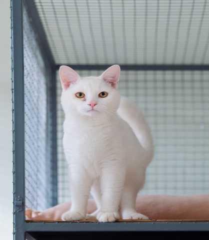 Отдам даром Белоснежный котик ждет хозяев!