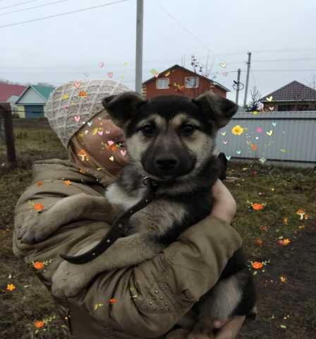 Отдам даром: Здоровый привитый щеночек, возраст 2-3 м