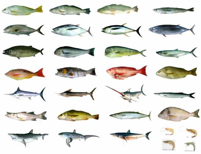 Продам морепродукты