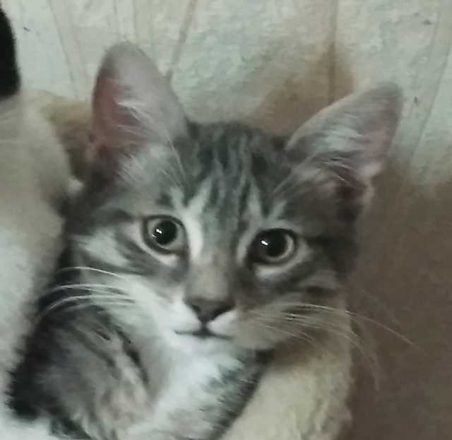Отдам даром: Котик