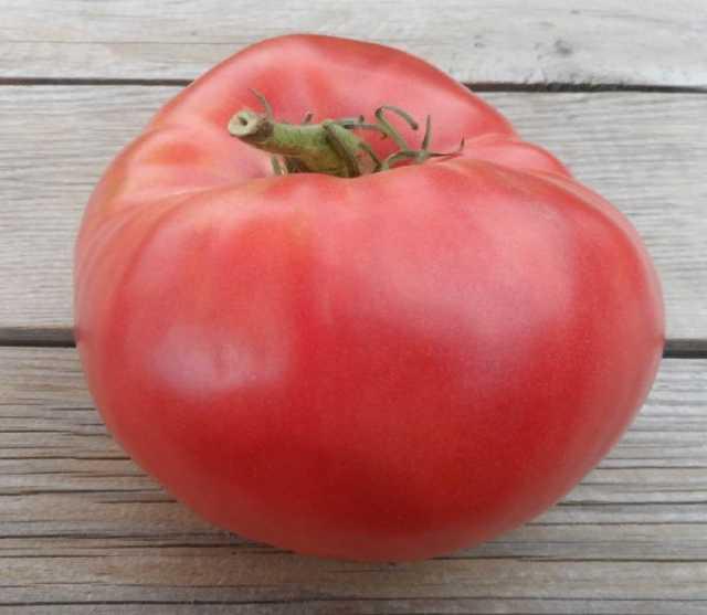 Продам Крупные томаты на сайте скороспелка.рф