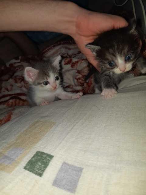 Отдам даром: Котята подкидыши
