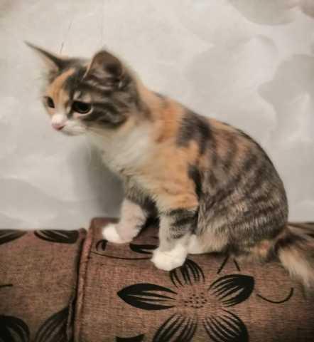 Отдам даром: Воспитанный домашний добрый котенок, 6 м