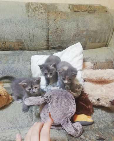 Отдам даром: Кошечки