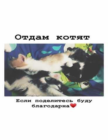 Отдам даром Отдам чёрно-белых котят