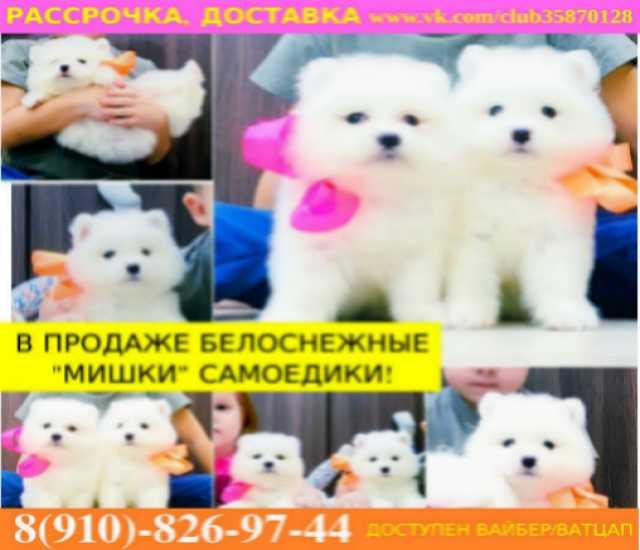 Продам Красивые щенки самоеда