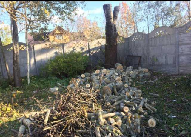 Предложение: Спил деревьев,кронирование