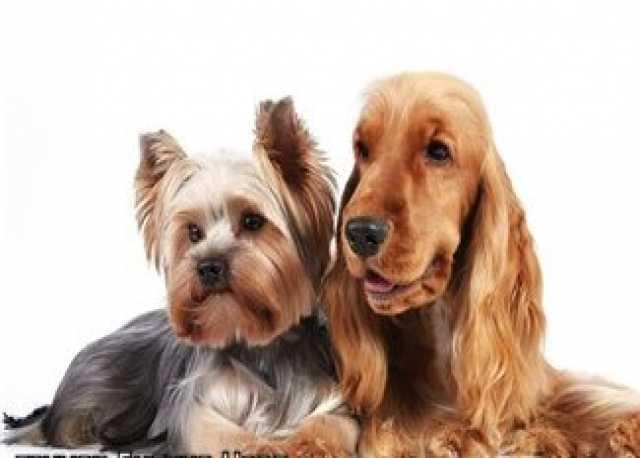 Предложение: стрижка собак красиво