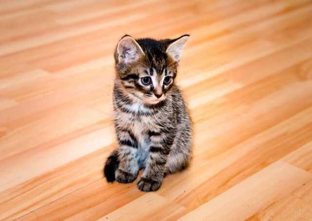 Отдам даром Отдам котят в добрые руки