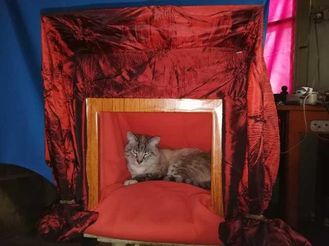 Продам: Домик для кота