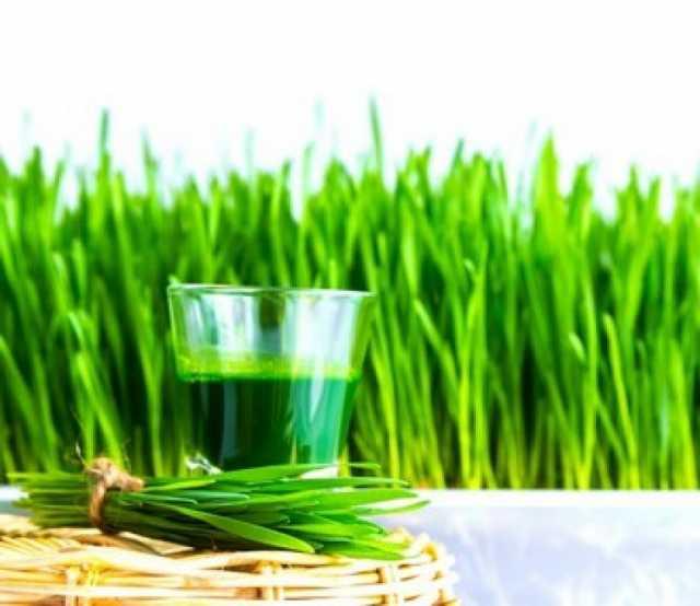 Продам: Оборудование для сока ростков пшеницы