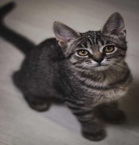 Отдам даром Два маленьких котенка ищут дом