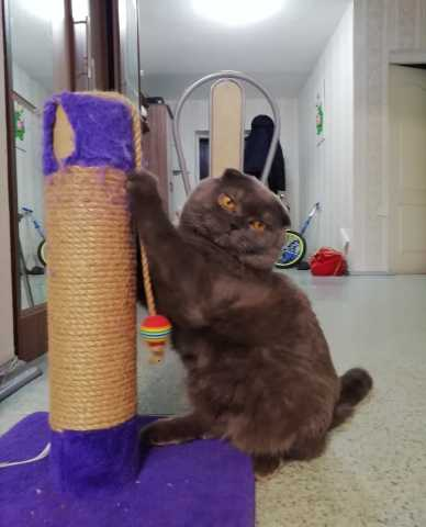 Предложение: Кот Ричард приглашает на вязку