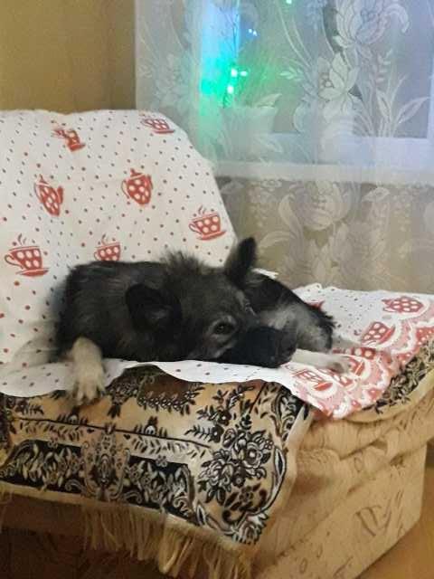 Отдам даром Отдам бездомную собаку в добрые руки