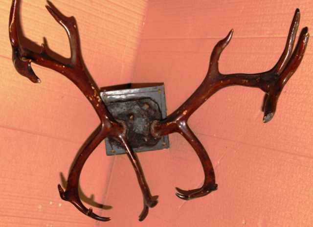 Продам: Рога оленя с креплением. Винтаж