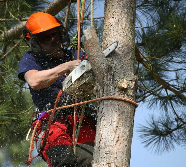 Предложение: Спилим дерево