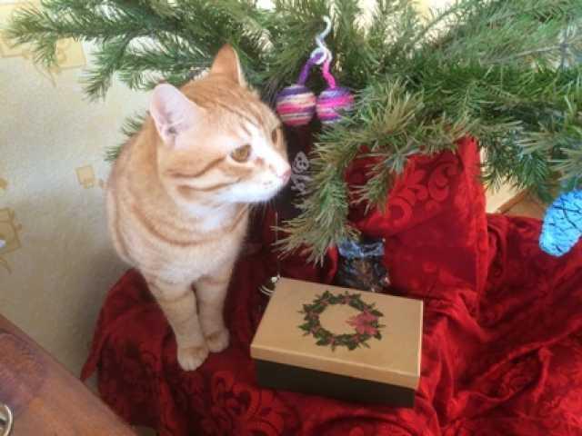 Предложение: Молодой рыжий котик познакомится с кошеч