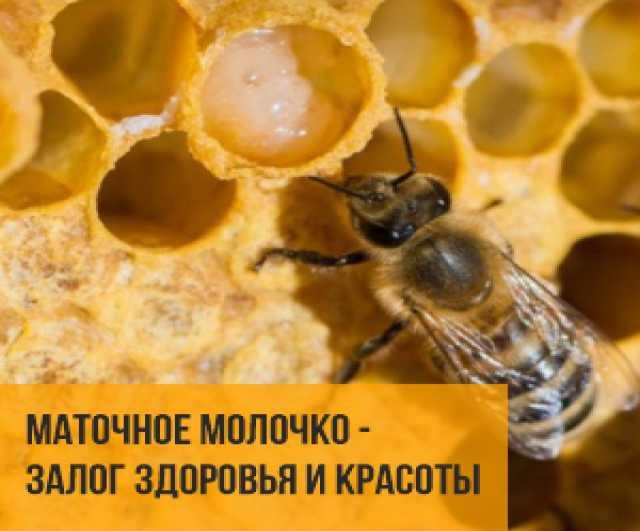 Продам: Пчелиное нативное маточное молочко