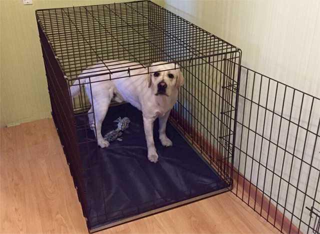 Продам Клетка для собак с поддоном Премиум