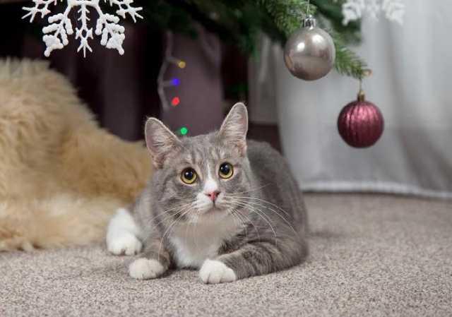 Отдам даром Трогательный, застенчивый, плюшевый коти