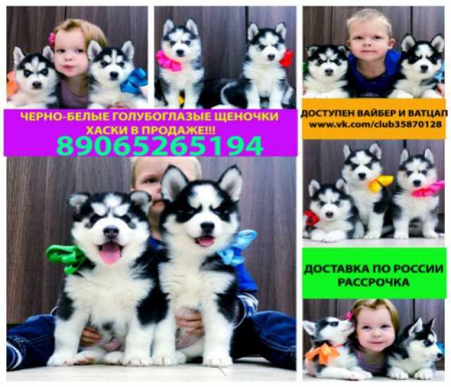 Продам Черно-белые щенки хаски