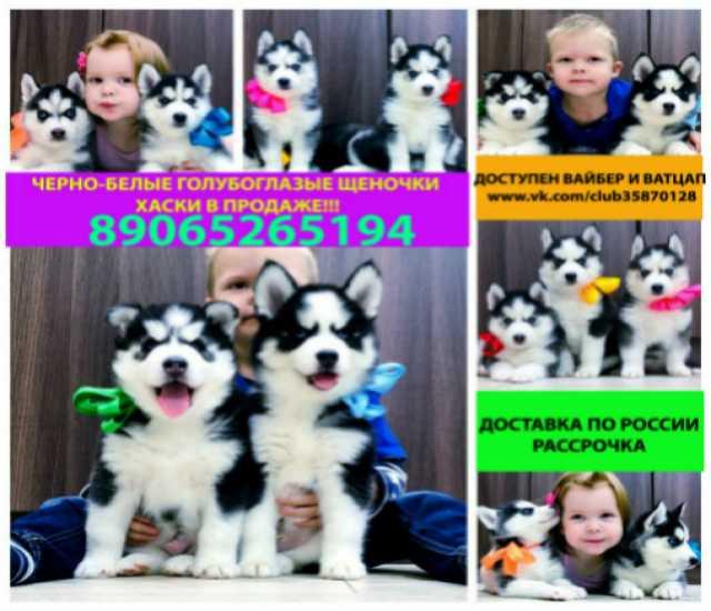 Продам Черно-белые настоящие щенки хаски
