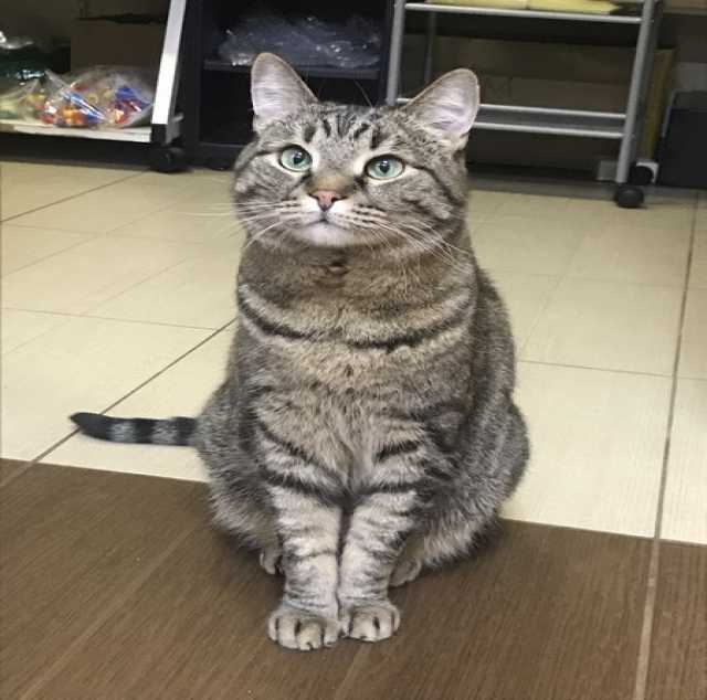 Отдам даром Предлагаем кота для души и для дома!