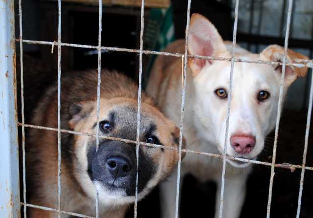 Отдам даром Собаки и щенки в добрые руки