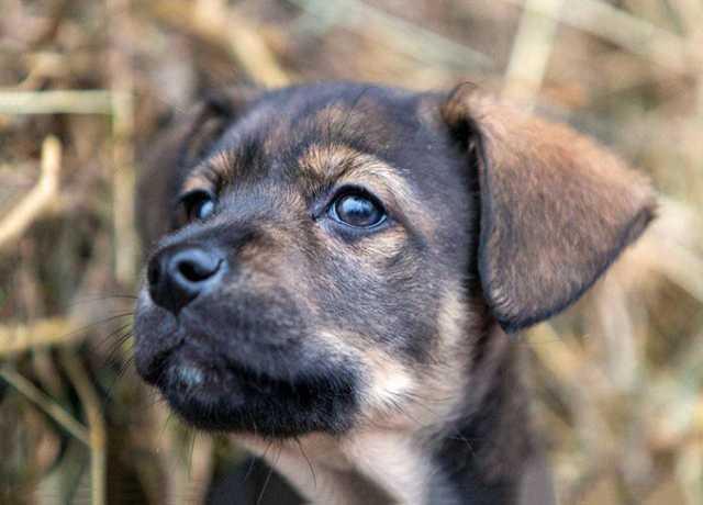 Отдам даром Кай, милый, ласковый щеночек в дар