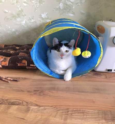 Продам Молодой кот Барсик - в добрые руки