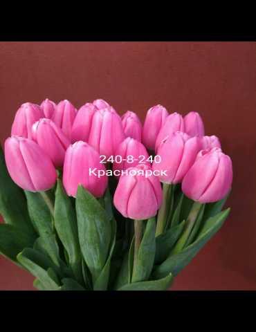 Продам Тюльпаны 12+ ОПТ и РОЗНИЦА