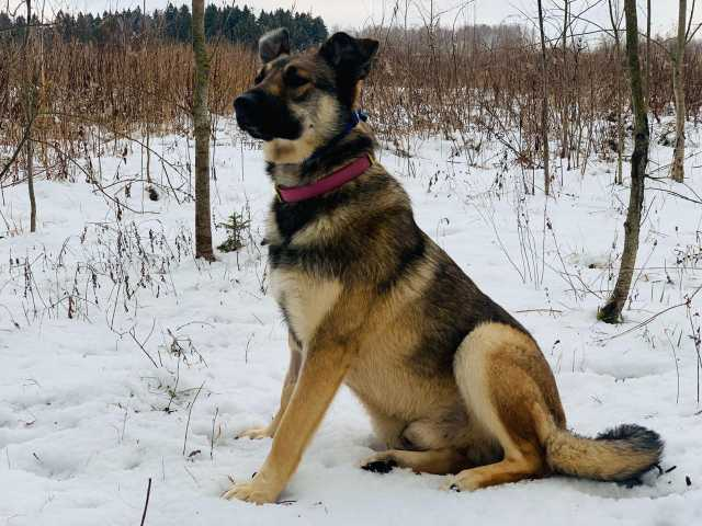 Отдам даром Молодой красивый пёс Макс ищет дом