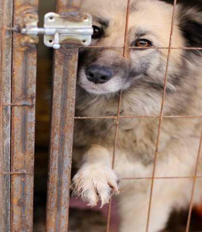 Отдам даром: Помогите спасти собак и щенков из отлова