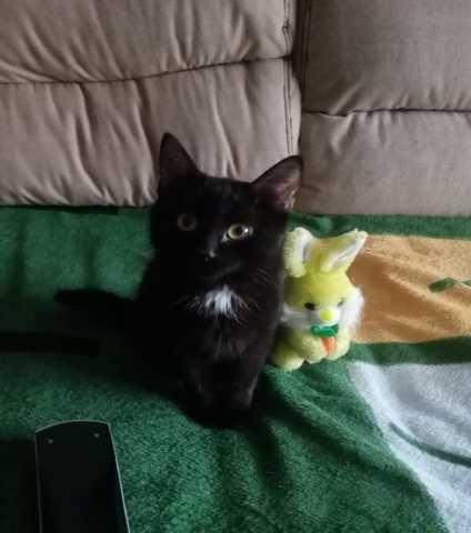 Отдам даром котёнок 4 месяца