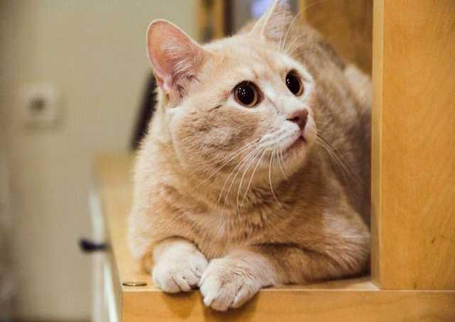 Отдам даром Рыжий кот