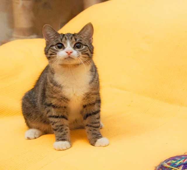 Отдам даром Говорящий котенок Барсик в дар