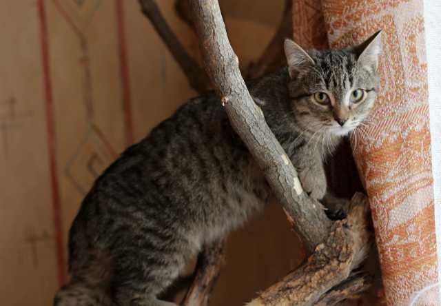 Отдам даром Котёнок Кассио- ласковый мурлыка