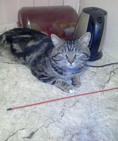 Отдам даром Нечеловечески красивый кот Кис