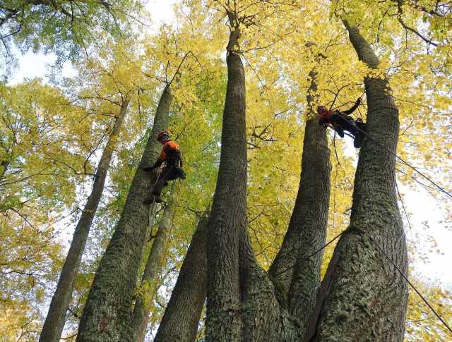 Предложение: Опиловка и спил деревьев