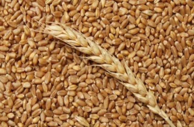 Продам: Пшеница, зерно франко-вагон FCA