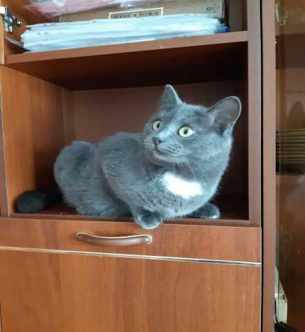 Отдам даром: Благородная плюшевая молодая кошечка