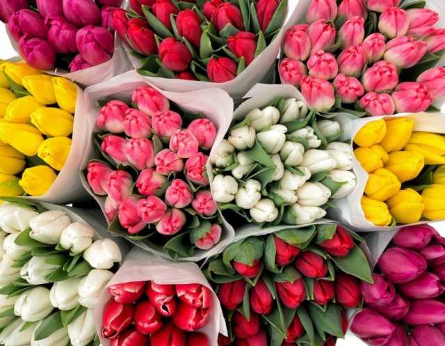 Продам: Самые красивые и свежие тюльпаны