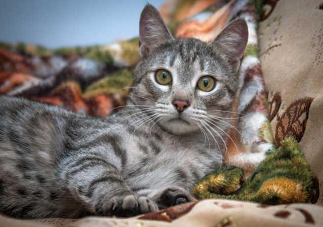 Отдам даром: Котик Басенька в добрые руки!