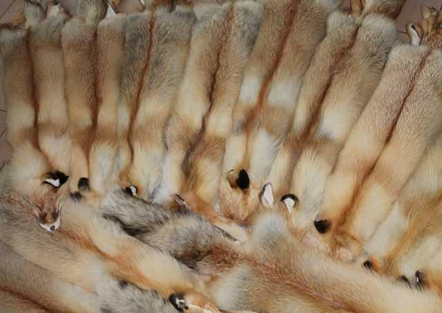Продам Продам шкуры рыжей лисы
