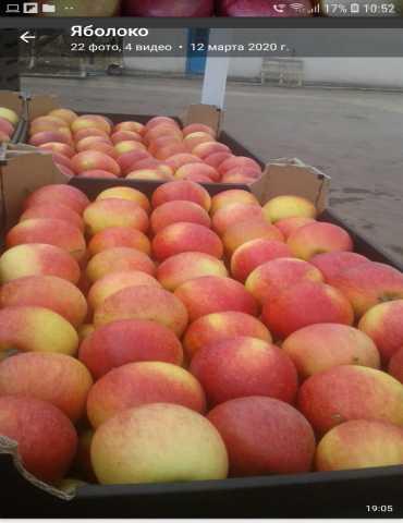 Продам: Яблоки сортов Пинова, Глостер, Флорина
