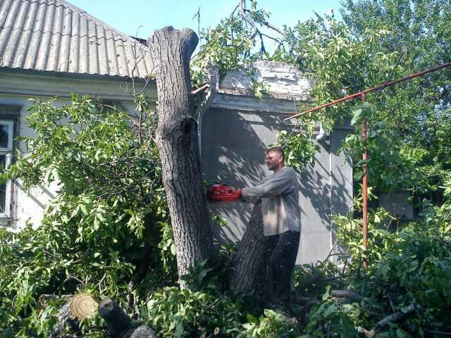 Предложение: Спил Деревьев. Уборка Територии
