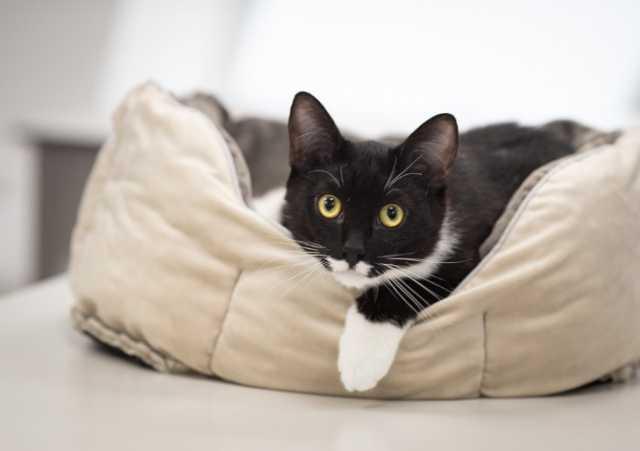 Отдам даром: Маркизный котик Джими